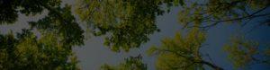Hillcrest Trees Background